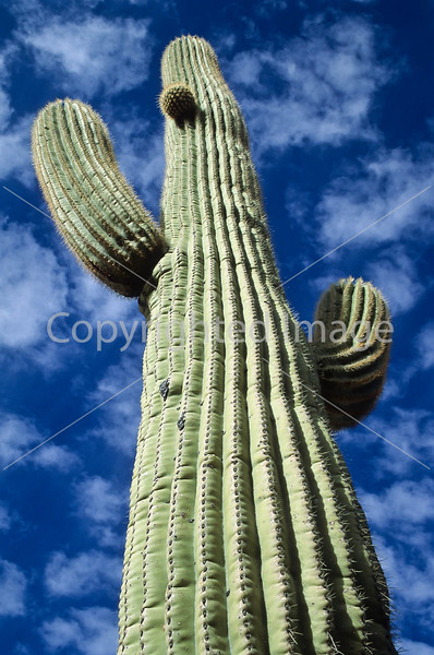 Saguaro National Park, Arizona - 1 - 72 ppi
