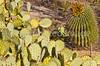 Saguaro Nat'l Park (east), Arizona -  D8-C3-0018 - 72 ppi