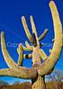Saguaro Nat'l Park (east), Arizona -  D8-C2 -0006 - 72 ppi-2