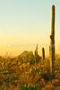 Saguaro National Park (west), AZ - D1-C3-0187 - 72 ppi