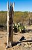 Saguaro Nat'l Park (east), Arizona -  D8-C3-0010 - 72 ppi
