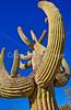 Saguaro Nat'l Park (east), Arizona -  D8-C2 -0018 - 72 ppi