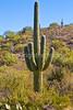 Saguaro Nat'l Park (east), Arizona -  D8-C3-0012 - 72 ppi