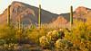 Saguaro National Park (west), AZ - D1-C3-0189 - 72 ppi