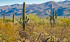 Saguaro Nat'l Park (east), Arizona -  D8-C3-0005 - 72 ppi