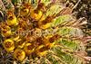 Saguaro Nat'l Park (east), Arizona -  D8-C3-0025 - 72 ppi