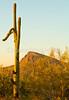 Saguaro National Park (west), AZ - D1-C3-0192 - 72 ppi