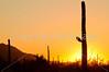 Saguaro National Park (west), AZ - D1-C3-0205 - 72 ppi