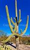 Saguaro Nat'l Park (east), Arizona -  D8-C2 -0002 - 72 ppi