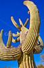 Saguaro Nat'l Park (east), Arizona -  D8-C2 -0018 - 72 ppi-2