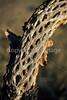Saguaro National Park, Arizona - 30 - 72 ppi