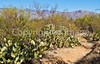 Saguaro Nat'l Park (east), Arizona -  D8-C3-0017 - 72 ppi