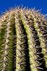 Saguaro Nat'l Park (east), Arizona -  D8-C3-0007 - 72 ppi