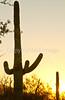 Saguaro National Park (west), AZ - D1-C3-0196 - 72 ppi