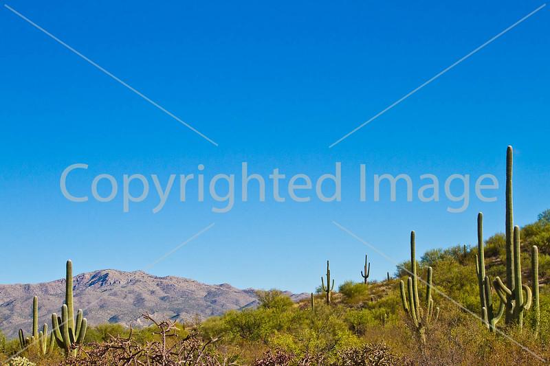 Saguaro Nat'l Park (east), Arizona -  D8-C3-0015 - 72 ppi