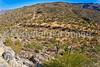 Saguaro Nat'l Park (east), Arizona -  D8-C2 -0022 - 72 ppi
