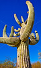 Saguaro Nat'l Park (east), Arizona -  D8-C2 -0021 - 72 ppi