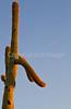 Saguaro National Park (west), AZ - D1-C3-0198 - 72 ppi
