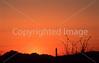 Saguaro National Park, Arizona - 44 - 72 ppi