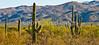 Saguaro Nat'l Park (east), Arizona -  D8-C3-0006 - 72 ppi