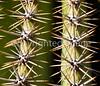 Saguaro Nat'l Park (east), Arizona -  D8-C3-0007 - 72 ppi-2