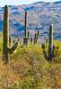 Saguaro Nat'l Park (east), Arizona -  D8-C3-0004 - 72 ppi