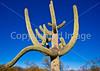 Saguaro Nat'l Park (east), Arizona -  D8-C2 -0004 - 72 ppi