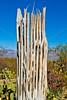 Saguaro Nat'l Park (east), Arizona -  D8-C3-0016 - 72 ppi