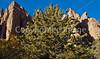 Chiricahua Nat'l Monument, Arizona - D5-C2 -0065 - 72 ppi