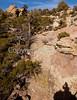 Chiricahua Nat'l Mon in Arizona -  D7-C2  -0134 - 72 ppi