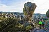 Grottoes Trail, Chiricahua Nat'l Mon in Arizona -  D7-C3 -0180 - 72 ppi