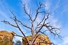 Grottoes Trail, Chiricahua Nat'l Mon in Arizona -  D7-C2#2  -0208 - 72 ppi