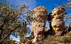 Chiricahua Nat'l Mon in Arizona -  D7-C2  -0149 - 72 ppi