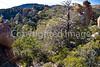 Chiricahua Nat'l Mon in Arizona -  D7-C2  -0125 - 72 ppi