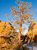 Grottoes Trail, Chiricahua Nat'l Mon in Arizona - D5-C2 -0094 - 72 ppi