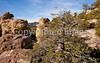 Chiricahua Nat'l Mon in Arizona -  D7-C2  -0142 - 72 ppi
