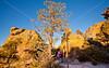 Grottoes Trail, Chiricahua Nat'l Mon in Arizona - D5-C2 -0096 - 72 ppi