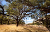 Chiricahua Nat'l Mon in Arizona -  D7-C2  -0114 - 72 ppi
