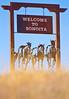 Sonoita, southeast Arizona   D4-C1-0014 - 72 ppi