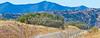 Along Arizona Hwy 82 between Sonoita & Patagonia   D4-C1 -0089 - 72 ppi-2