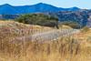 Along Arizona Hwy 82 between Sonoita & Patagonia   D4-C1 -0089 - 72 ppi