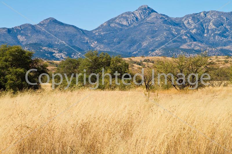 Along Arizona Hwy 82 between Sonoita & Patagonia  D4-C3-0038 - 72 ppi