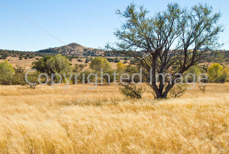 Along Arizona Hwy 82 between Sonoita & Patagonia  D4-C3-0035 - 72 ppi