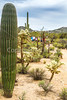 Sojourn cyclists in Tucson's Sabino Canyon -  D2-C3-0016 - 72 ppi