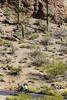 Sojourn cyclists, Gates Pass, Tucson, AZ - D3 - C1- - 72 ppi-5