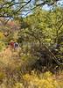 Fort Bowie Nat'l Historic Site, AZ - D6-C3 -0163 - 72 ppi-2