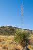 Fort Bowie Nat'l Historic Site, AZ - D6-C3 -0069 - 72 ppi