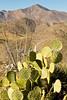 Fort Bowie Nat'l Historic Site, AZ - D6-C3 -0387 - 72 ppi