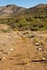 Fort Bowie Nat'l Historic Site, AZ - D6-C3 -0090 - 72 ppi