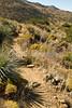 Fort Bowie Nat'l Historic Site, AZ - D6-C3#2-0005 - 72 ppi